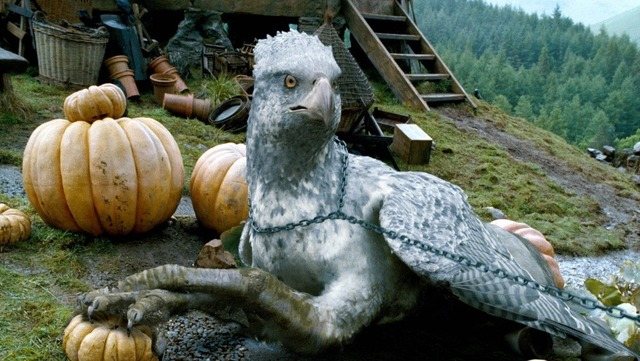 Buckbeak in Pumpkin Patch from Prisoner of Azkaban film