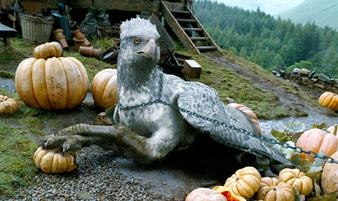 Buckbeak sitting in the pumpkin patch, looking to camera.